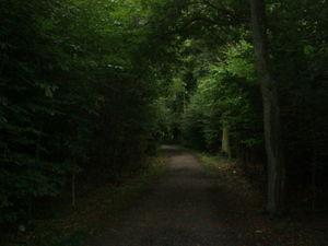 ger_forest_00007.jpg