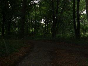 ger_forest_00008.jpg