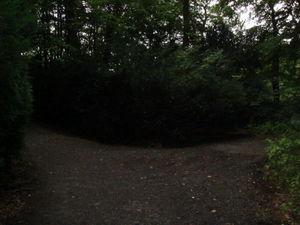 ger_forest_00009.jpg
