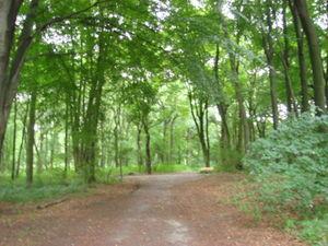 ger_forest_00020.jpg