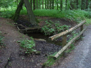ger_forest_00026.jpg