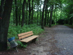 ger_forest_00027.jpg