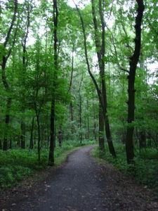 ger_forest_00030.jpg