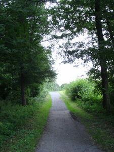 ger_forest_00031.jpg